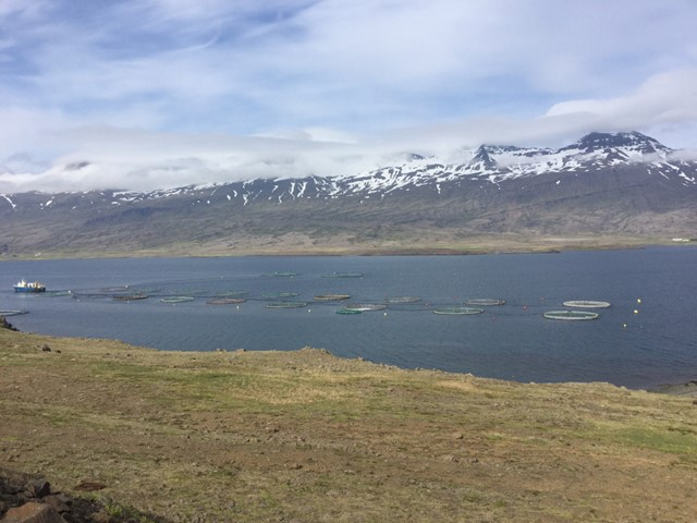 Ræddu áhyggjur sínar við Þorgerði Katrínu