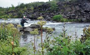 Elliðaárnar, óvenjuleg úthlutun og eitraður eldislax