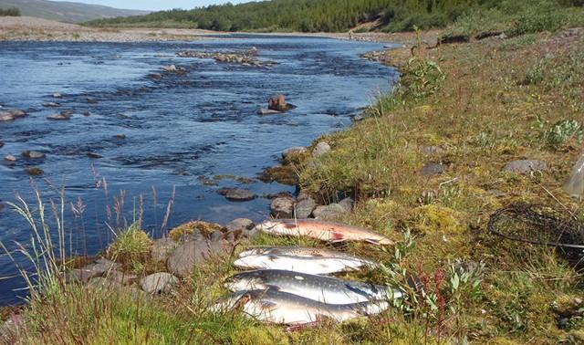 Laxinn, bleikjan og Eyjafjörður