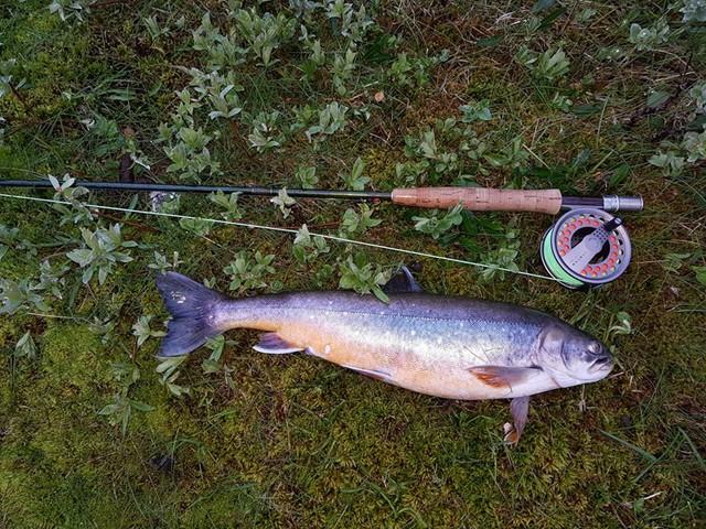Veiddi loksins fisk í Þingvallavatni