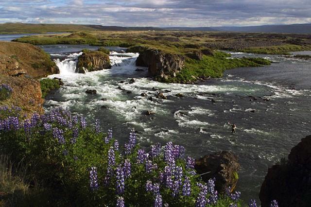 Dagar í Aðaldal - úr safni Flugufrétta